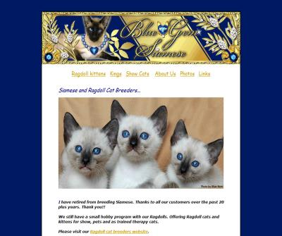Siamese cat breeders - Blue - Gem
