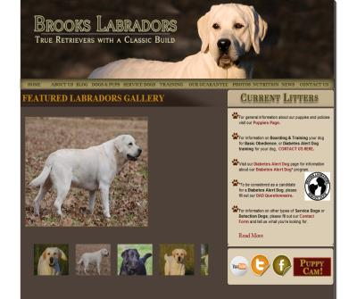 Labrador Breeders & Retrievers in Dallas, Texas | Brooks Labradors |