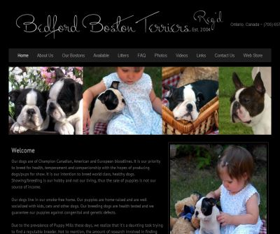 Breeders of Quality Boston Terriers & English Bulldogs