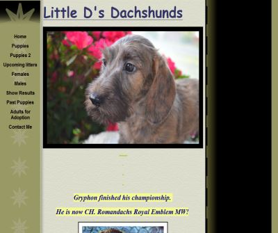AKC Registered Miniature Dachshunds