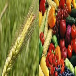 Agriculture, Food & Beverages Market Report